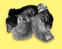 chatons-3.jpg